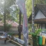 Belajar Tanam Padi di Kampung Tajur Purwakarta
