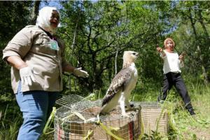 Lembaga Konservasi Lepas Liarkan Elang di Hutan Sancang