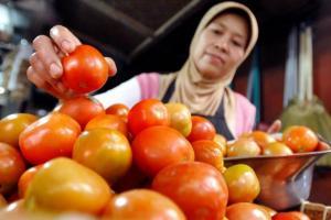 Harga Tomat Capai Rp8.500 per Kg di Cianjur, Ini Sebabnya