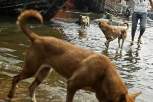 Jawa Barat Belum Terbebas Penyakit Rabies