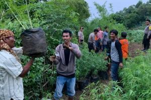 Seluas 1,5 Ha, Lahan Perhutani di Purwakarta Ditanami Ganja