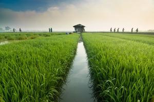 Lahan Pertanian di Kabupaten Bogor Menyusut