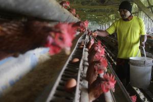Warga Usia Produktif Dilatih Beternak dan Menjahit
