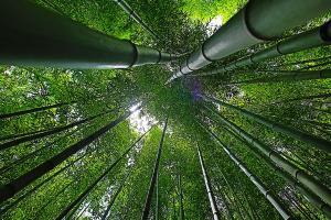Cegah Polusi Udara dan Krisis Air, Ayo Tanam Bambu