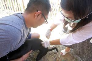 Cegah Rabies, Sebanyak 57 Anjing Liar Dieliminasi di Cianjur