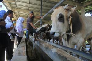 Ketua Pergizi: Lingkungan Pemotongan Kurban Harus Bersih