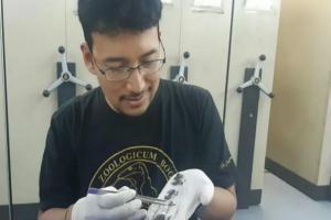 Peneliti LIPI Temukan Spesies Katak Baru