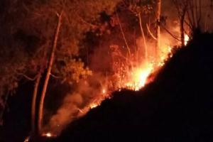 Hutan Gunung Cikuray Kebakaran