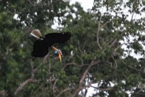 Upaya Mendorong Kelestarian Spesies Endemik