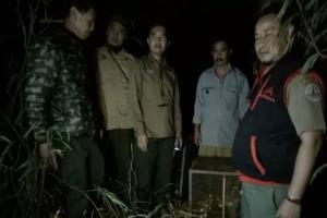Tiga Kukang Jawa Dilepasliarkan di Cagar Alam Kamojang