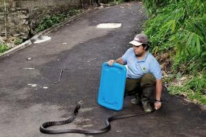 Menemukan Ular? Ini Kata Pengelola Kebun Binatang Bandung