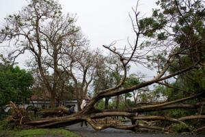 Antisipasi Pohon Tumbang, Pemkot Bandung Akan Lakukan Ini