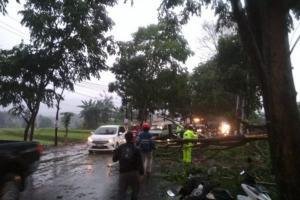 Pohon Tumbang, Jalan Raya Sukabumi-Cianjur Sempat Terputus