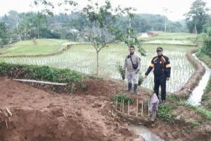 Sawah di Cianjur Terancam Gagal Panen Akibat Pergerakan Tanah