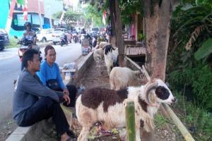 Ternak di Pasar Hewan Purwakarta Bebas Antraks