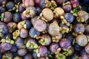 2020, Pemkab  Purwakarta Bidik Ekspor Manggis ke Timur Tengah