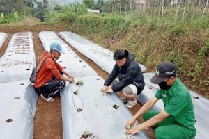 Jaga Kualitas Produk Tani, Polbangtan Bogor Promosikan Teknologi GAP