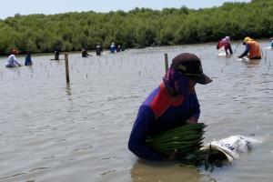 Pemerintah Rehabilitasi 223 Hektare Mangrove