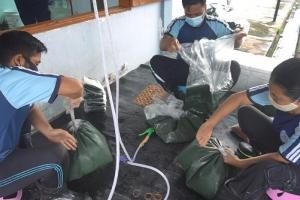 Peremajaan Unggul, KKP Salurkan 2000 Bantuan Calon Induk Udang