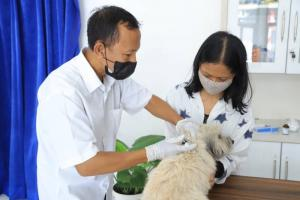 Catat! Ini Jadwal Vaksinasi Rabies Gratis Kota Tangerang