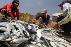 Nelayan dan Pembudidaya Ikan Kab. Tangerang Terima Bantuan